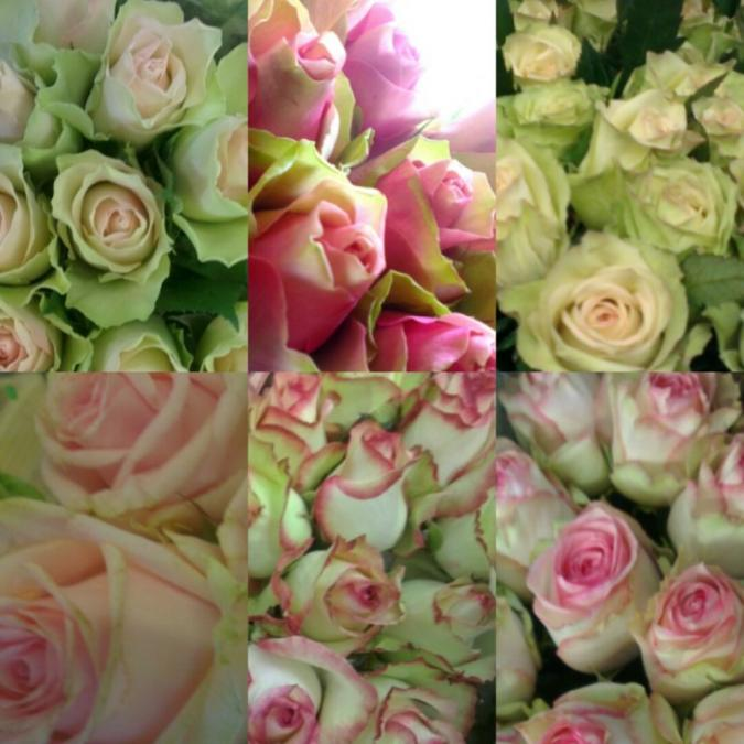 Flowers For Any Occasion Peamore Flora Exeter